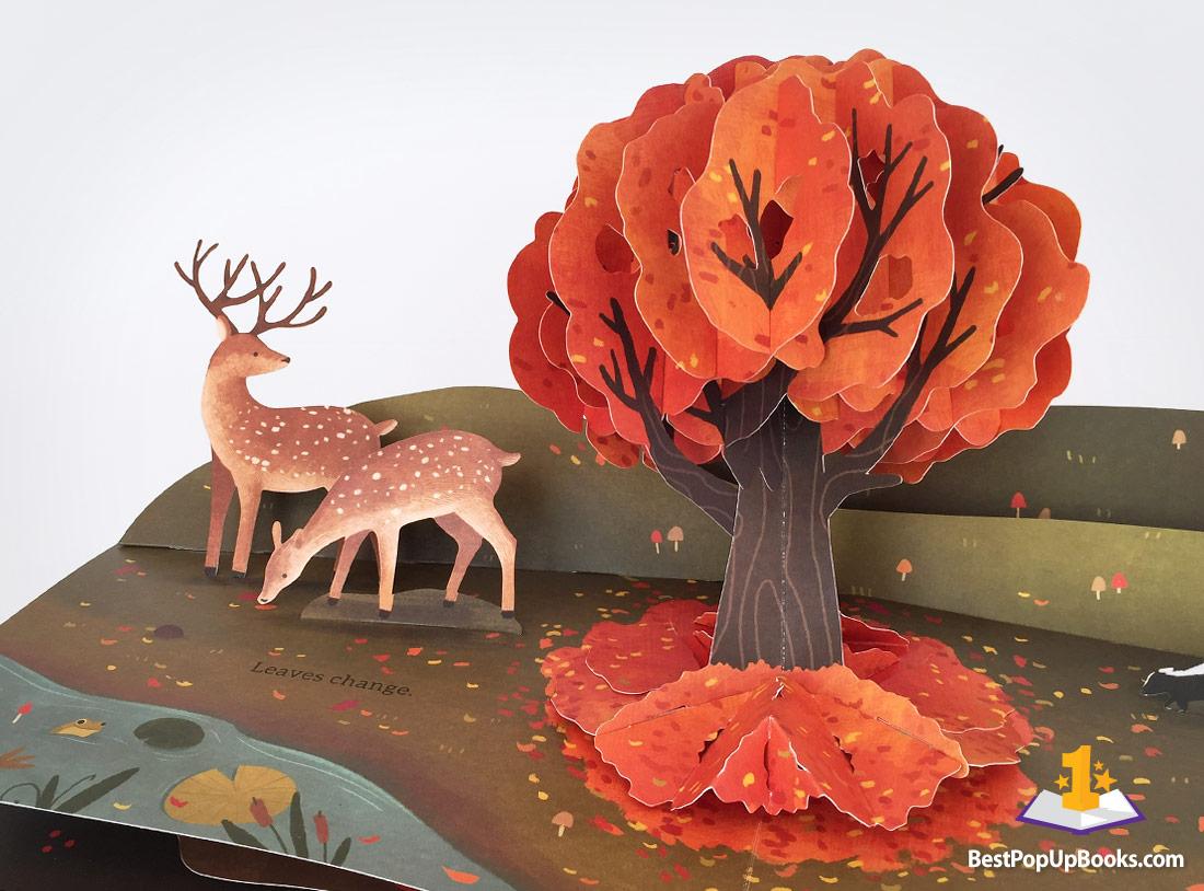 Książka pop up jesień liście